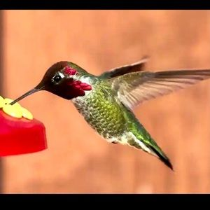 HUMMINGBIRDS ❤️Just for our happiness today 😊🌺🌸